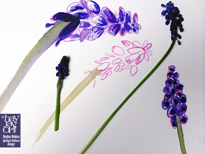 Sketchbook- Muscari drawings