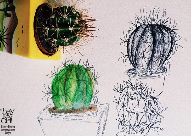 Cactus drawing- Hayley Holden weekly sketchbook series at www.hayjayoh.wordpress.com